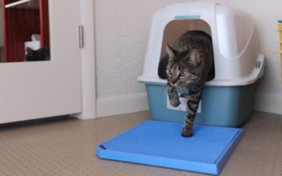 Cats Who Stop Using the Litterbox
